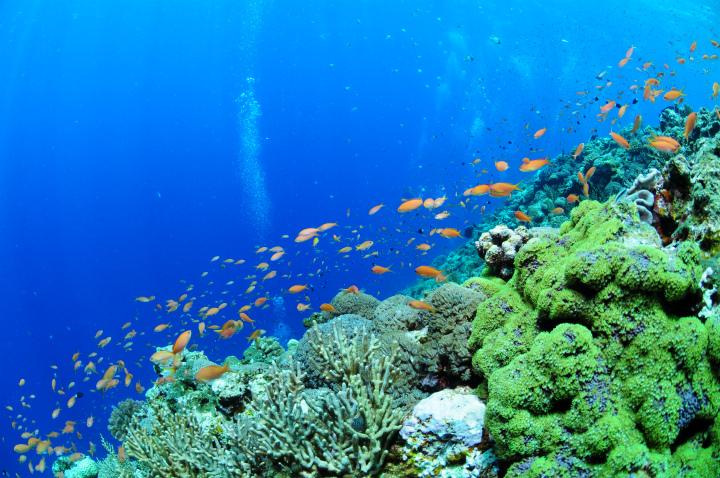 http://mellow-diving.com/diary2/DSC_7311.jpg
