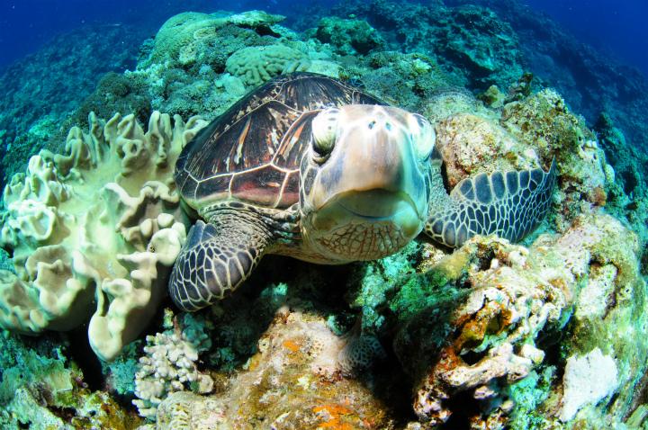 http://mellow-diving.com/diary2/DSC_7393.jpg